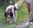 operant conditioning for gundog trainers