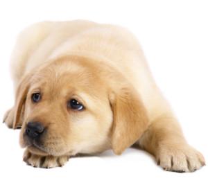 choosing-gundog-which-breed