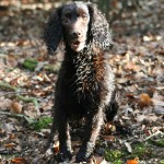 Lessons from a professional gundog trainer