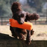 The Gundog Club