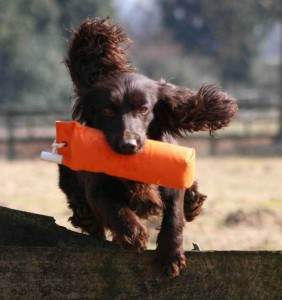 The Gundog Club for gundog training