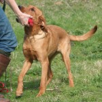 Grade Two Gundog: The delivery
