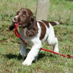 Three helpful rules for a great puppy recall
