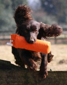 Gundog tests and pedigree papers