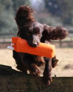 Gundog tests and pedigree papers