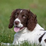 The Trouble with Springers: Part Three