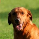 Clicker Gundog – a new resource page