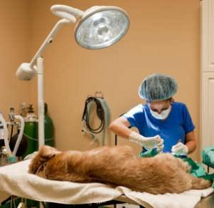 working dogs veterinary bills