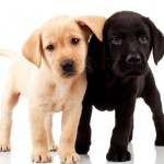 Gundog Training: Is my dog suitable?