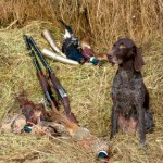 Choosing your gundog 2: which dog is best for you?