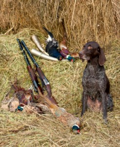 choosing your gundog, which type