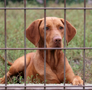 should you kennel a gundog