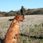 Christmas Gifts for Gundog Owners