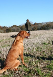 Gifts for Gundogs