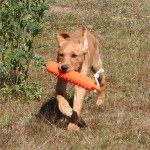 Puppy retrieve: Part Two
