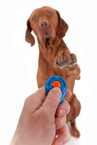 does-clicker-training-work
