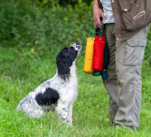 gundog club tests, are they easy?