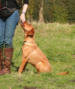 Stop whistle gundog training