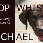 Stop whistle training with Rachael: first steps
