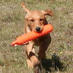 Puppy Retrieve: Part Three