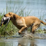 All about controlled retrieving