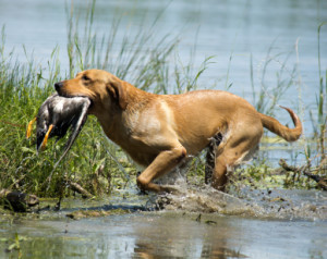 all about retrieving