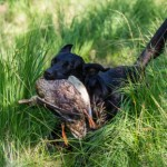 An introduction to blind retrieving