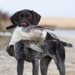 The role of the gundog