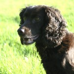 The Graded Training Scheme for Gundogs