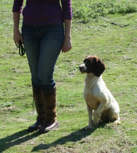 grade two gundog training
