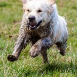 Teaching your gundog permanent blinds: Part Three