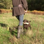 The walking hold: a gundog delivery exercise