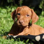 Puppy care and training – a new book
