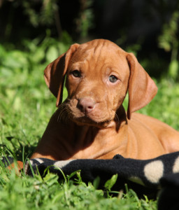puppy care & training: a new book