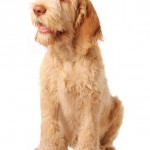 How to stop your gundog whining, can it be done?