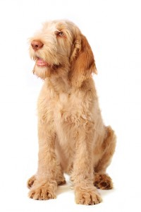 how to stop your gundog whining