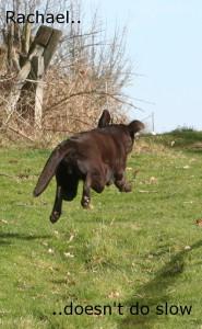 retrieving-alley-outrun