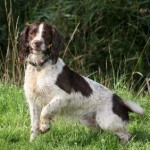 Gundog Training Information: finding your way around this library