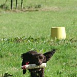 Gundog methods: using retrieve markers