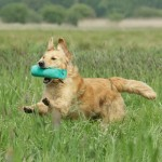 Gundog training: the trouble with retrieving drills and exercises