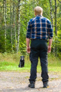 6 steps to casting back for gun dogs
