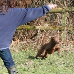Hand signals for gundogs in training