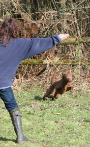 handsignals-for-gundogs