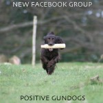 Positive Gundogs: a new Facebook group