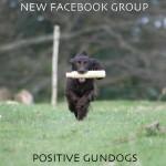 Positive Gundogs: a new Facebook group