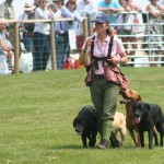 CLA Gamefair 2014: Gundogs and sunshine, what could be nicer