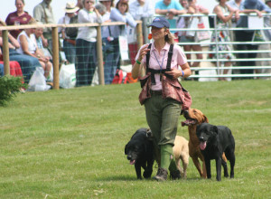 gamefair 2014 labrador display