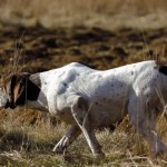 6 myths and the truth about food in gundog training