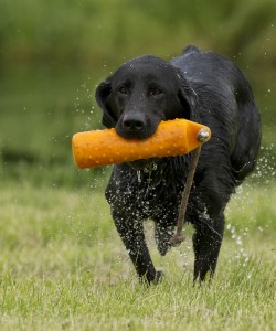 teach your dog to want to retrieve
