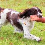Operant conditioning in a nutshell for gundog trainers